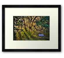 Empty Bench Early Morning Framed Print