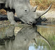 Rhino silhouetted in water while drinking by jozi1