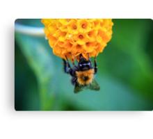 Bee on the orange ball Canvas Print