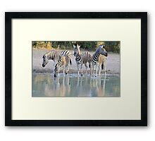 Zebra Reflection - Beautiful African Wildlife Framed Print