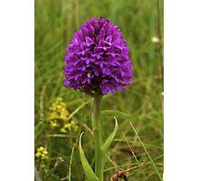 Pyramidal Orchid, Inishmore Photographic Print