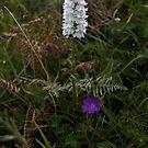 Irish Wildflower Calendar [veryireland.com] by George Row
