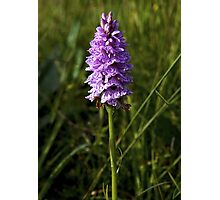 Spotted Orchid, Kilclooney, Donegal Photographic Print