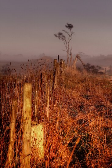 Morning Light Along the Fenceline by Christine Smith