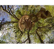 Squirrel Sculpture on path through Prehen Woods,  Derry Photographic Print