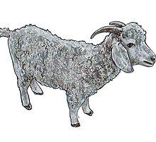 Angora goat by hadkhanong