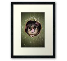 """Fatso"" Brushtail Possum Framed Print"