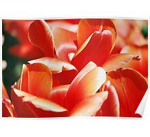 Sunshine Tulips Poster