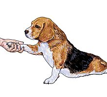 Human hand holding beagle's leg by hadkhanong