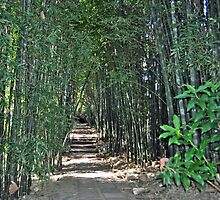 Bamboo Walk by Margaret Stevens