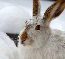 Rabbit by ldredge