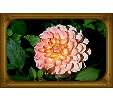 A Dahlia the Color of Peaches and Cream Photographic Print