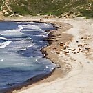 Beach reserved to cows by 29Breizh33