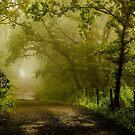 Misty Woodland Lane by John Dunbar