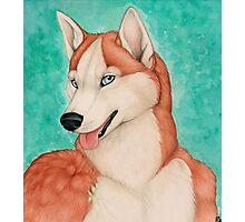 Red Husky Photographic Print