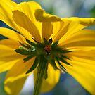 Ladybug Shelter by LinneaJean
