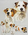 Jack Russell Terrier by BarbBarcikKeith