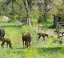 Spring Colts - By John Robert Beck by studiobprints