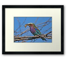 A great catch! Framed Print