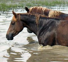 """Horses with Attitude no. 7 """"Race Ya Across the Pond, Joe. Loser Buys a Round!"""" by © Bob Hall"""