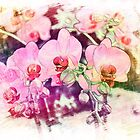 Art style pink orchid flowers. Beautiful flower photo art. by naturematters