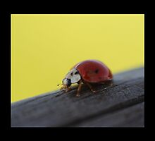 Photograph Nature Ladybug Ladybird Crawling On Wood by PhenomPixels