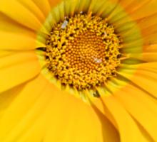 Little Sunshine Sticker