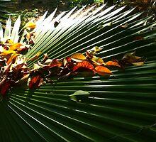 color and light of the jungle - colores y luz de la selva by Bernhard Matejka