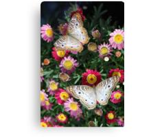 Painted Ladies in Bloom  Canvas Print