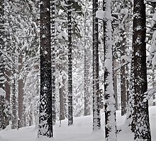 Grove of Snow-Flocked Pine Trees by Jared Manninen