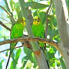 Budgie Chat by Penny Smith