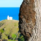 Lighthouse Termite Tree  by Penny Smith