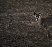 """Deer"" by ArravinthPhoto"