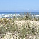 beach by Floralynne