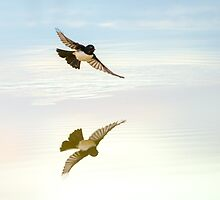 Wagtail Reflection by Henry  Cook