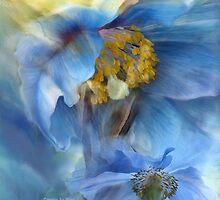 Poppies So Blue by Carol  Cavalaris