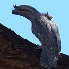 Tawny Frogmouth by watchthebirdie