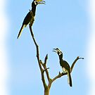 HORNBILL HEAVEN! by NICK COBURN PHILLIPS
