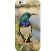 White Belly Sunbird - African Wild Birds of Iridescent Beauty iPhone Case/Skin