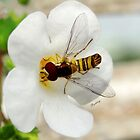 Happy Hover Fly by Barbny