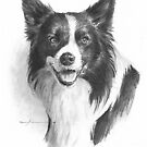 border collie drawing by Mike Theuer