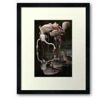 More Flamingos Framed Print