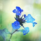Tangled up in Blue by Linda Lees