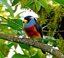 Colorful Mindo Bird by Al Bourassa