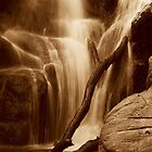 Halls Falls Tasmania by Imi Koetz
