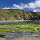 A green beach by Steve plowman
