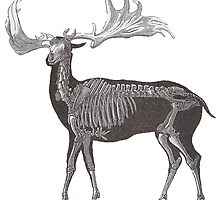 Megaloceros - Giant Prehistoric Elk by AntiqueImages