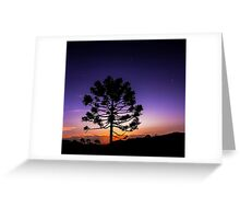 Araucaria Under Orion Greeting Card
