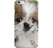 Cute Puppy Shih Tsu iPhone Case/Skin