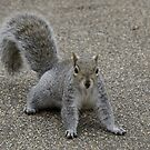 Squirrel at the park by Sarah Horsman